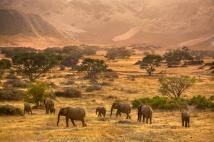 Lanting_Desert_Elephants_015942-01a