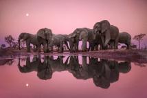 Lanting_Elephants_Twilight_003108-01