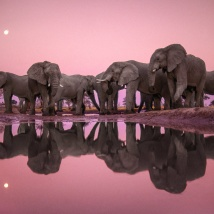 Lanting_Elephants_Twilight_003108-01