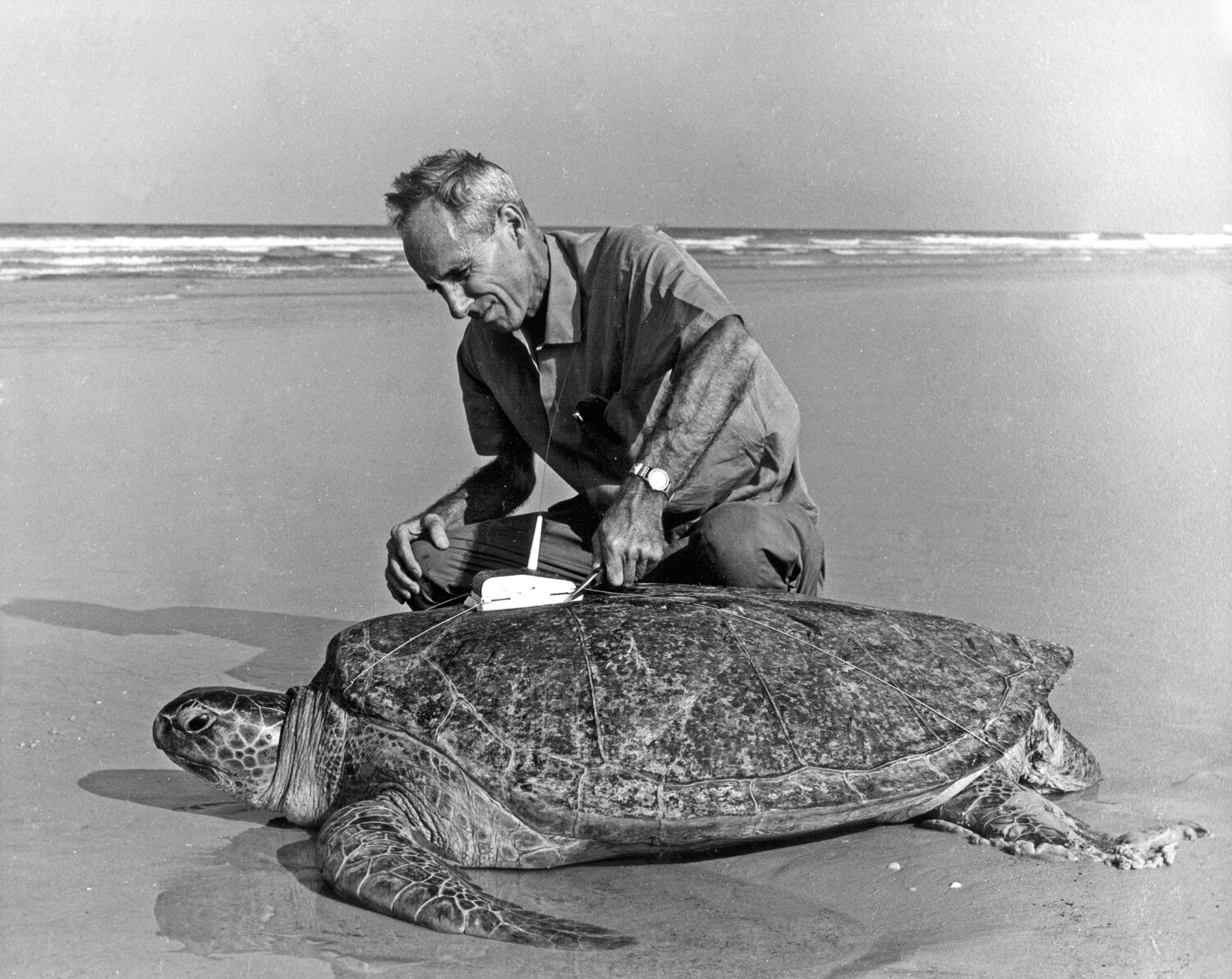 Episode 1: Dr. Archie Carr — SEE Turtles